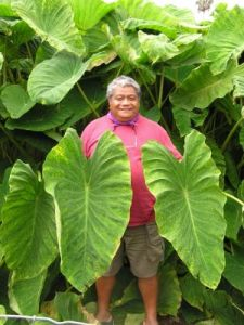 Big Island Kalo Farmer Jerry Konanui