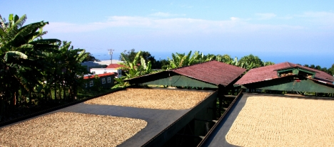 Coffee Parchment Drying