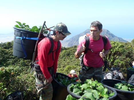 Members of the Waianae Mountain Watershed Partnership team up with Volunteers from the  Oahu Army Natural Resource Program to support efforts to restore the Kamakahala in its natural habitat. DLNR photo.