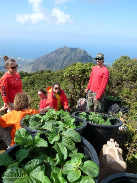Members From DLNR's  Natural Area Reserves System, Waianae Mountain Watershed Partnership, and volunteers from Oahu Army Natural Resource Program collaborated to outplant 150 Kamakahala plants. DLNR photo.