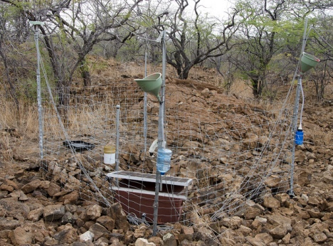 This sap flow system collects transpiration data from nearby kiawe trees, Puu Waawaa HETF Unit.