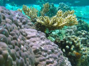 Ofu lagoon, image courtesy Gates laboratory