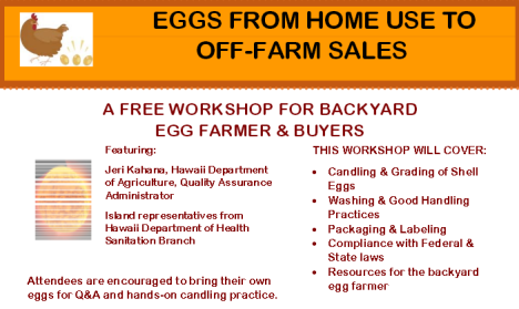 Egg Workshop