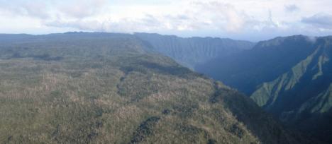 Alakai Plateau