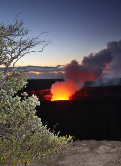 Halema'uma'u Crater in Kīlauea Volcano, framed by 'ōhi'a lehua tree. NPS photo/Jay Robinson